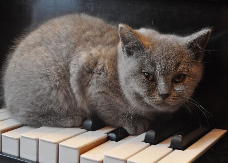 gato_y_piano.jpg