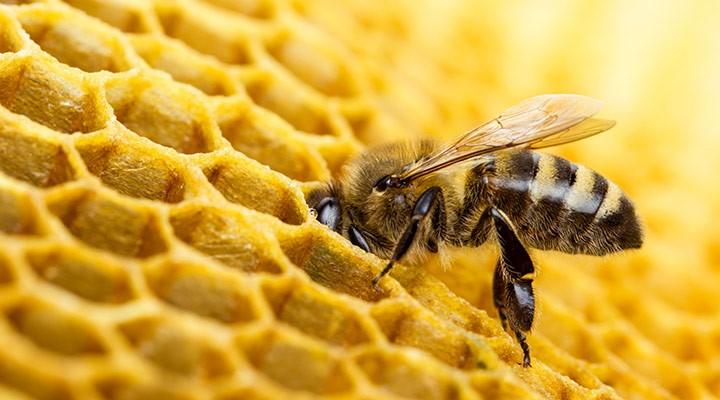 Día Mundial de las abejas 2019. La tecnología que contribuye a su protección