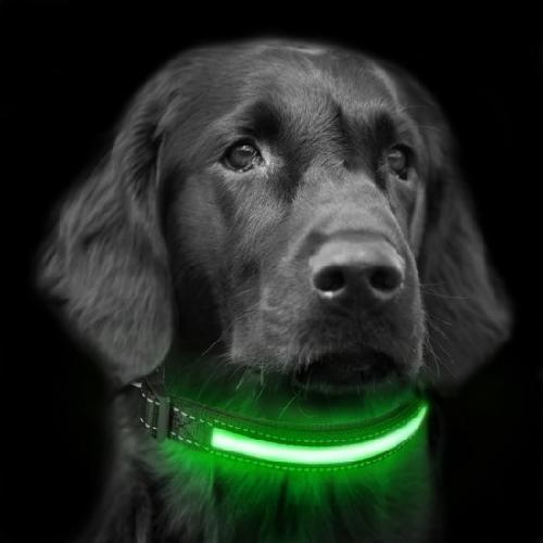 perro con collar LED vede