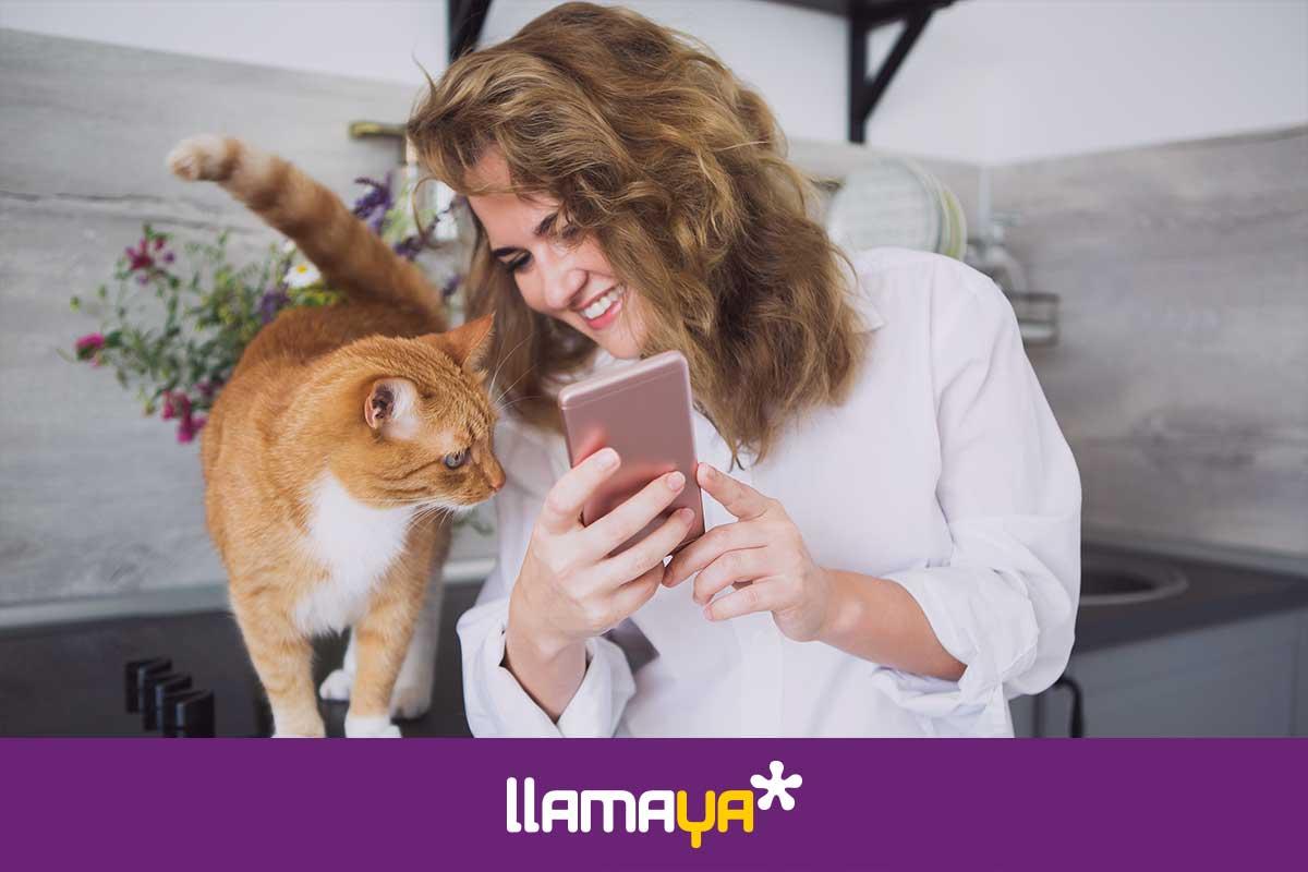 Apps de Android y Apple para celebrar el Día Mundial del Gato