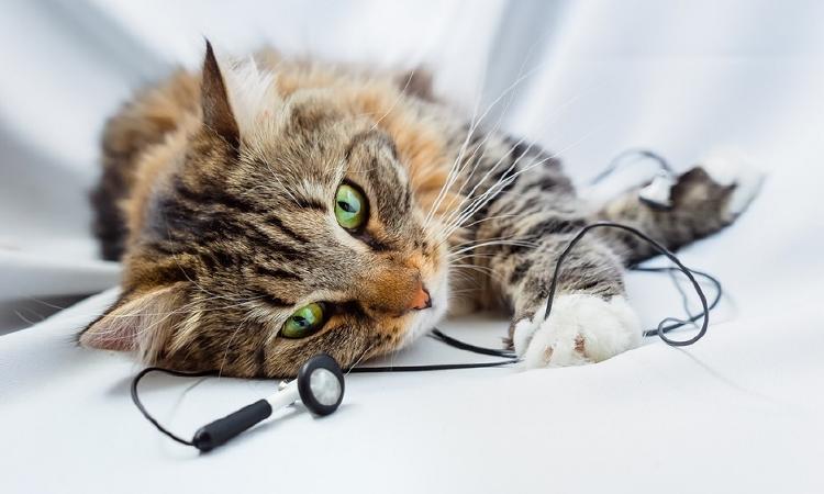 un gato escuchando música